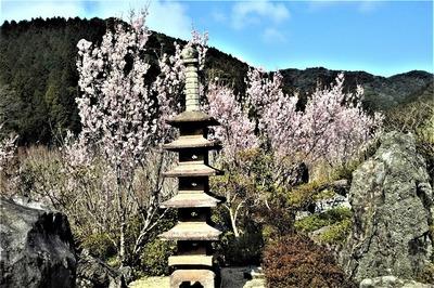 安藤庭園の季節の花2.jpg
