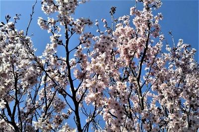 安藤庭園の季節の花3.jpg