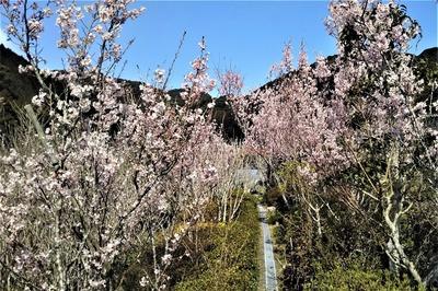 安藤庭園の季節の花5.jpg