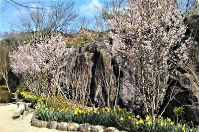 安藤庭園の季節の花6.jpg