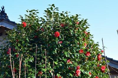 宮本さんの季節の花1.jpg
