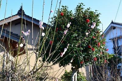 宮本さんの季節の花2.jpg