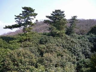 展望台から.jpg