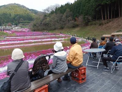 展望所から芝桜1.jpg
