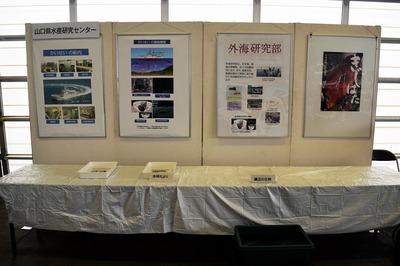 山口県水産研究センター展示.jpg