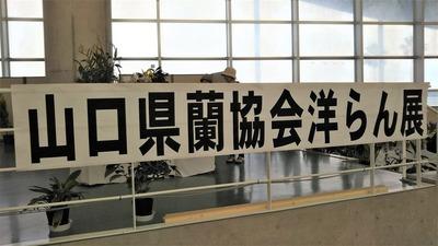 山口県蘭協会洋らん展.jpg