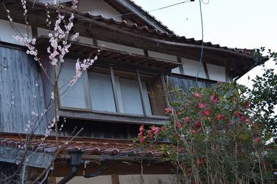 山根さん・岩本さんの季節の花.jpg