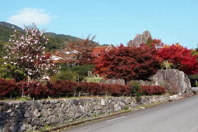 山茶花と紅葉.jpg