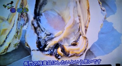 岩がきを長門の特産品に.jpg