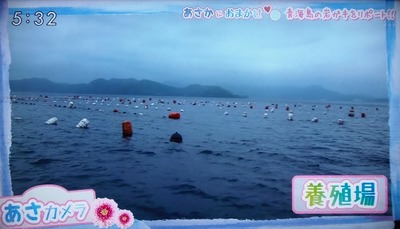 岩がき育成場.jpg