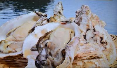 岩がき1.jpg