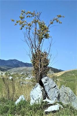 岩の間から木が.jpg