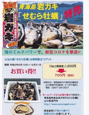 岩ガキ特価販売.jpg