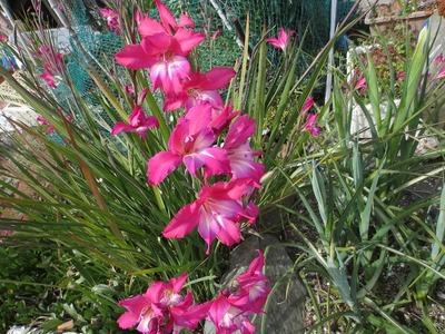岩本さんの花.jpg