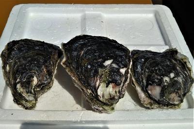 岩牡蠣1.jpg