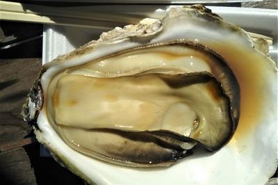 岩牡蠣2-1.jpg