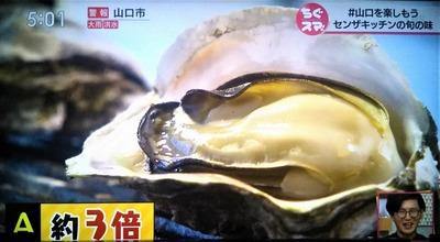 岩牡蠣6.jpg