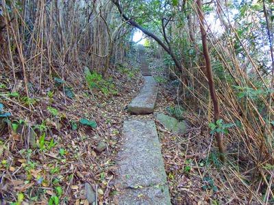川尻岬灯台への道2.jpg