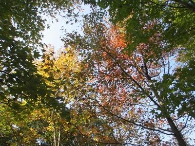 常盤湖の秋3.jpg