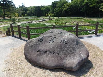 常盤菖蒲園.jpg