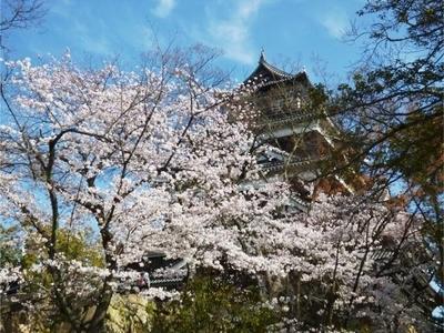 広島城と桜2.jpg