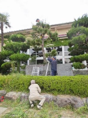 庭師プロの技.jpg