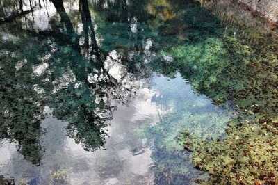 弁天池水面に映る木々.jpg