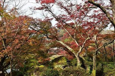 御船山楽園の秋色10.jpg