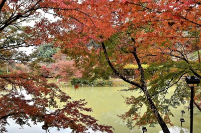 御船山楽園の秋色5.jpg