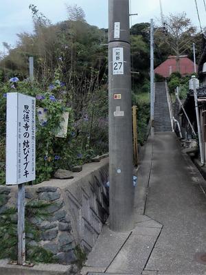 恩徳寺の結びイブキ入口.jpg