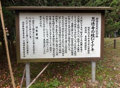 恩徳寺の結びイブキ説明2.jpg