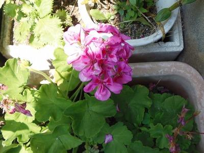 我が家の季節の花.jpg