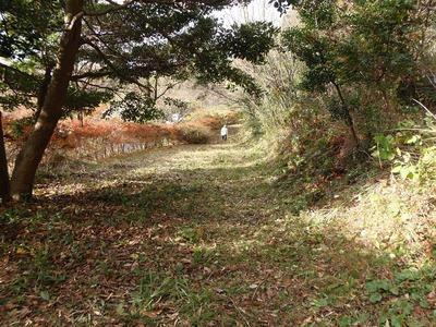 整備された登山道.jpg