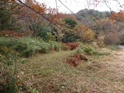 整備された登山道2.jpg
