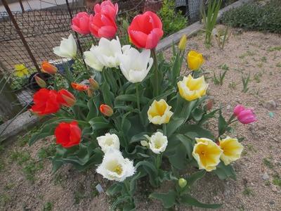 新前さんの花.jpg
