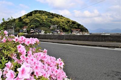 新緑の六浦(もーら)山と季節の花.jpg