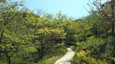 新緑の青海島さくらの里3.jpg