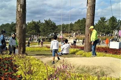 日本一高い木のブランコ3.jpg