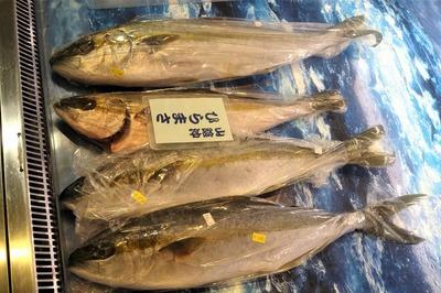 日本海の鮮魚.jpg