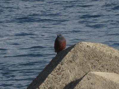 日本海の鳥2.jpg