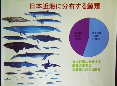 日本近海に分布する鯨類.jpg