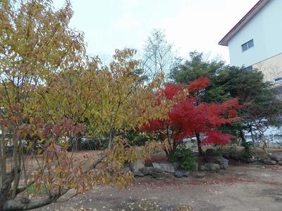 日置農高の秋色.jpg