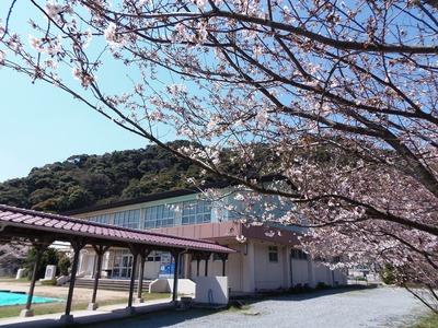 旧青海島小学校の桜6.jpg