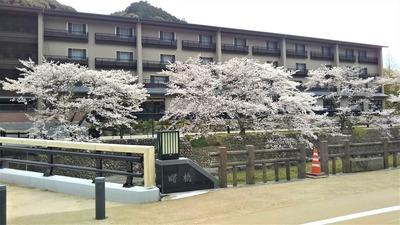 星野リゾート界長門と桜2.jpg