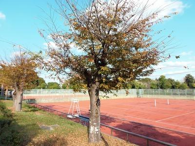 晩秋色とテニスコート.jpg