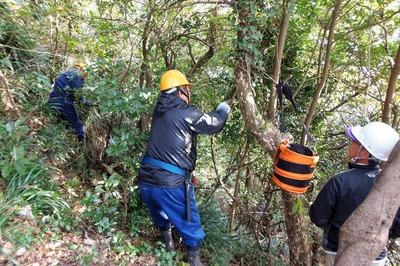 木々の伐採1.jpg