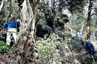 木々の伐採2.jpg