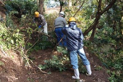 木々の伐採3.jpg