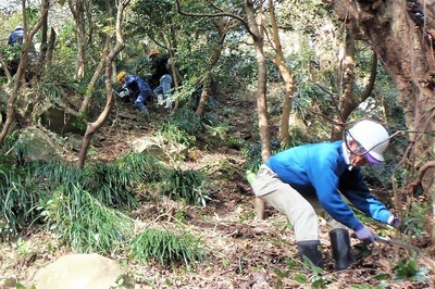 木々の伐採6.jpg