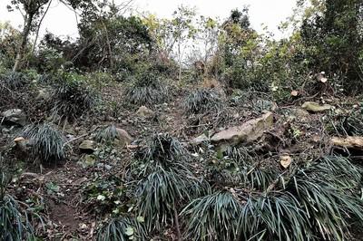 木々の伐採後1.jpg